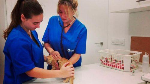 Alumnas de prácticas en una clínica veterinaria