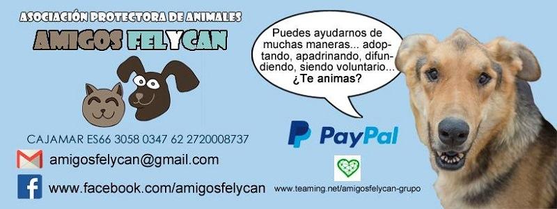 Asociación protectora de animales Amigos Felycan de Murcia