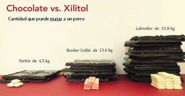 cantidad-de-chocolate-y-xilitol-mortal-para-perros