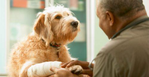veterinaria asistencia veterinaria El auxiliar veterinario en el servicio de ortopedia y traumatología