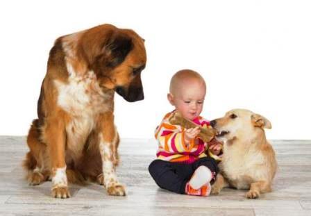 Cómo prevenir y tratar los celos entre perros 3