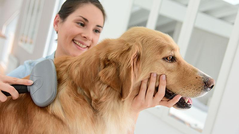 cepillado y aseo de perro