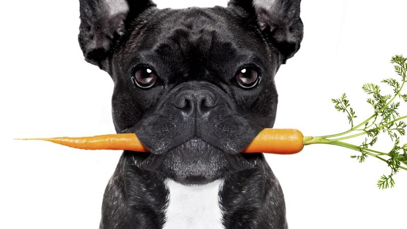 ¿Son buenas las verduras para los perros? 1