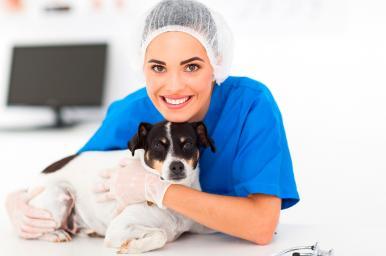 Auxiliar de clínica veterinaria online (ACV)