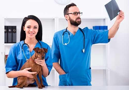 Curso de Auxiliar técnico veterinario - ATEVET | CIM Formación