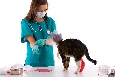 Vendajes funcionales en veterinaria