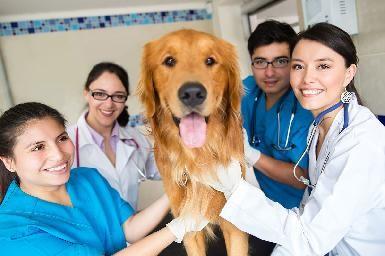 Técnico superior en asistencia veterinaria y estilismo canino