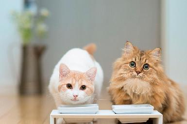 Nutrición y dietética veterinaria