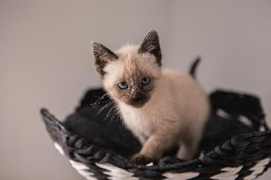 La importancia del ATV en los cuidados intensivos del gatito