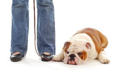 Adiestramiento canino de base