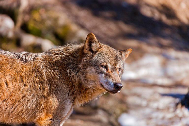 Cuidados de animales salvajes, de zoológicos y acuarios (Oficial)