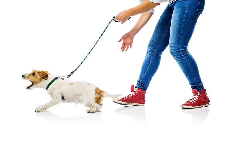 Técnicas de modificación de conducta canina