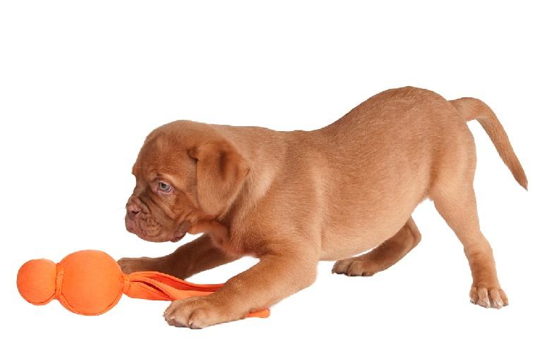 Enriquecimiento ambiental y bienestar del perro