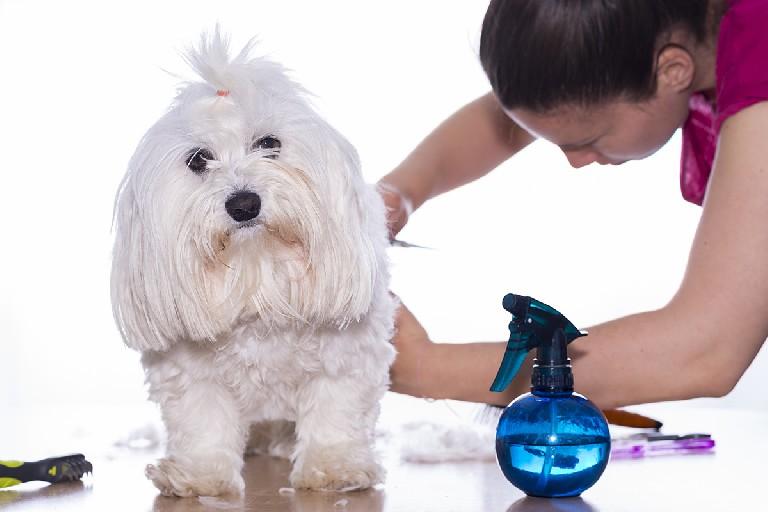 Técnicas avanzadas de peluquería canina