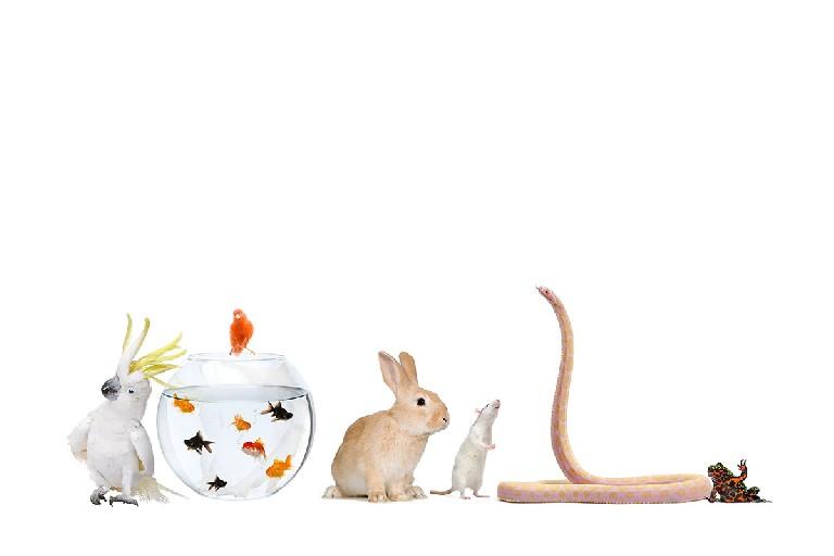 Técnico especialista en animales exóticos