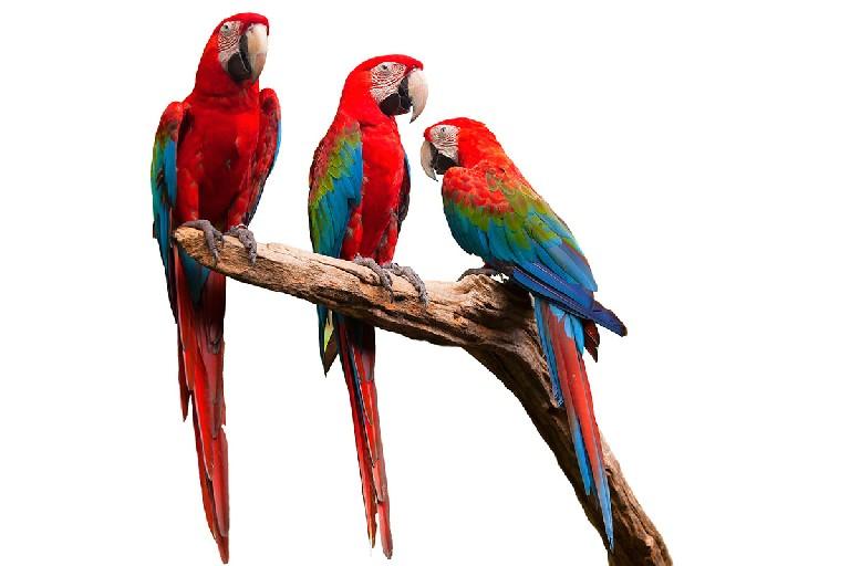 Técnico en aves exóticas